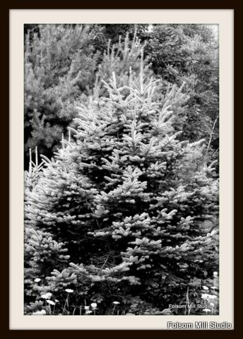 Fat Little Christmas Tree