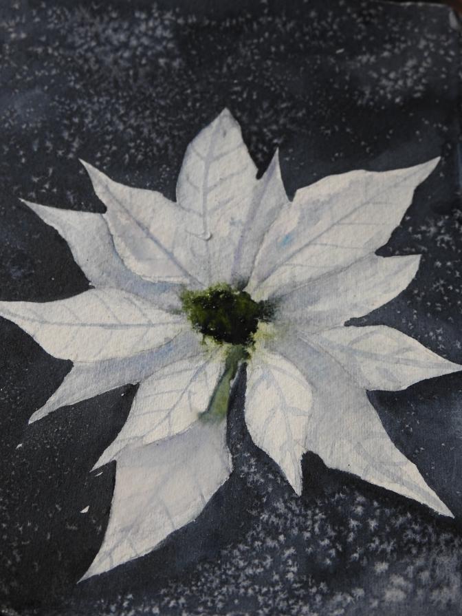 White Poinsettia in watercolor